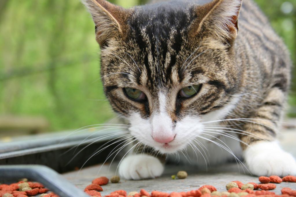 Władze miasta apelują o pomoc dla kotów.